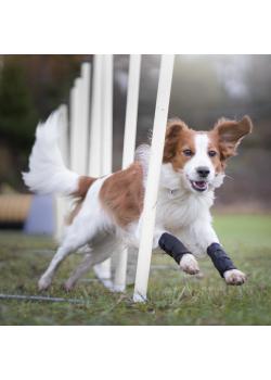 Back on Track bandager til hund