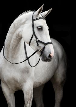 Horseware trenser, grimer og tilbehør