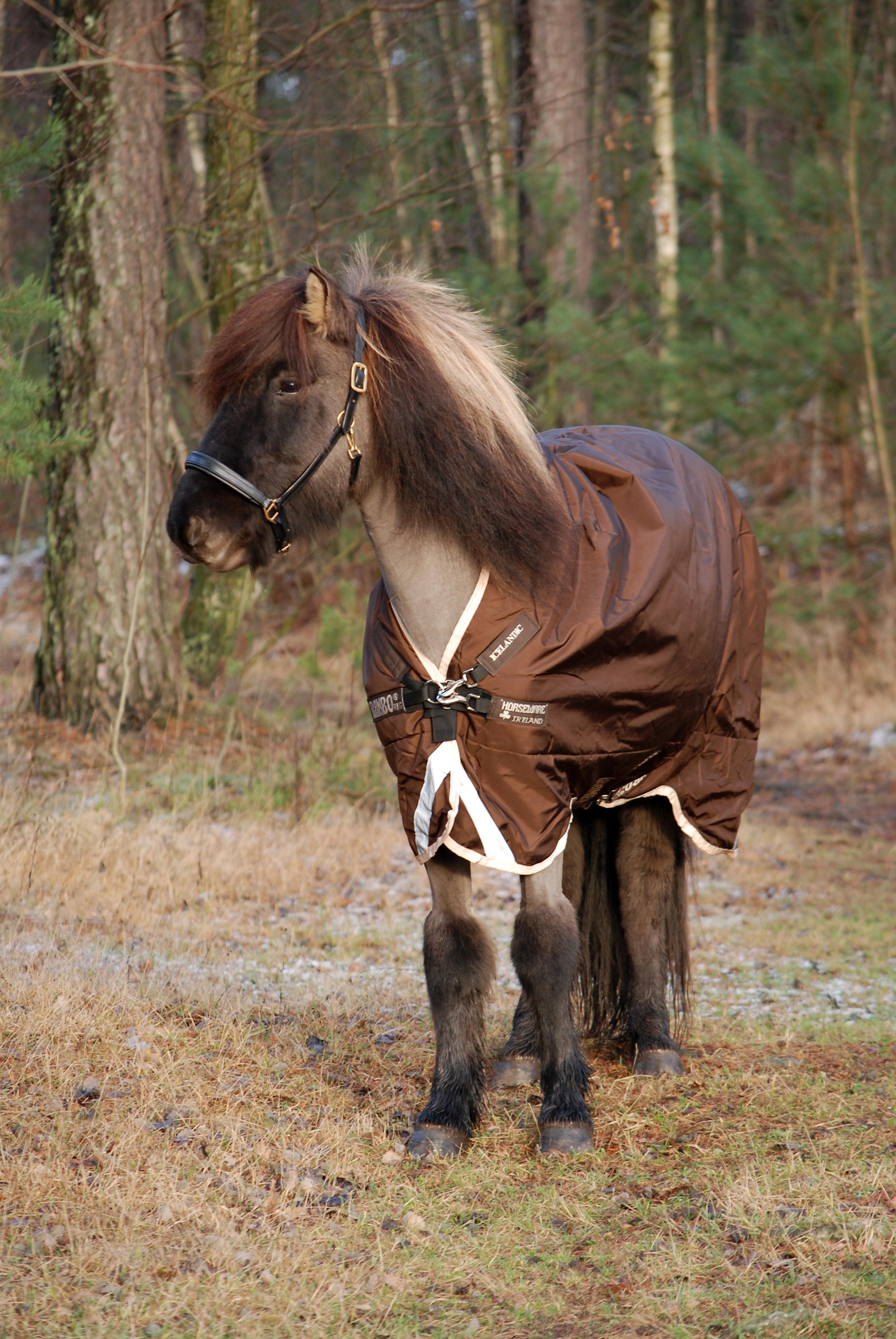 Horseware Icelandic dækkener